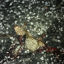 toad, asphalt, death